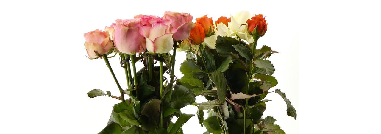 impressie rozen