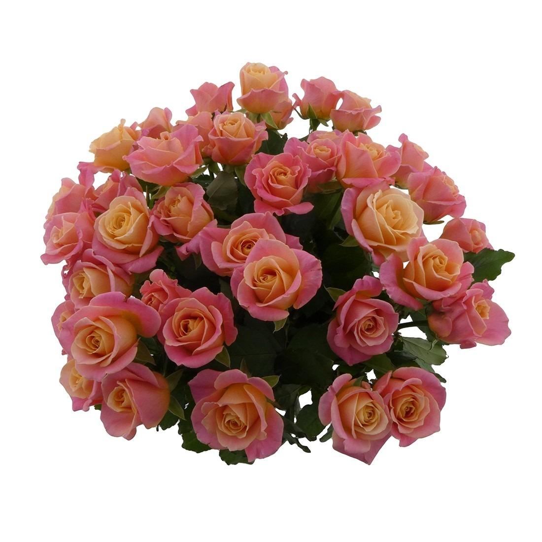 beeldveilen rozen bloemen