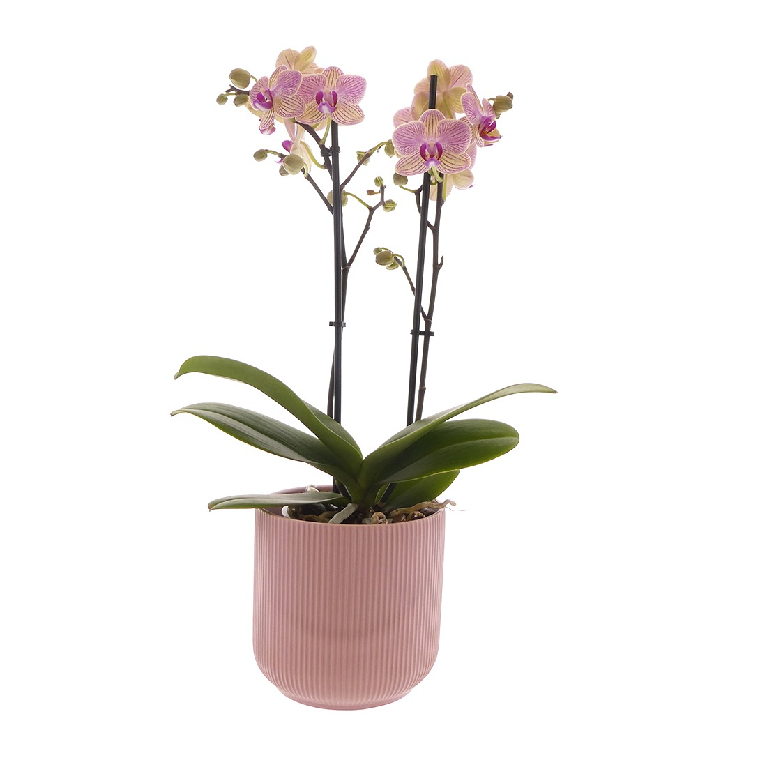 Large 360 1 orchidee