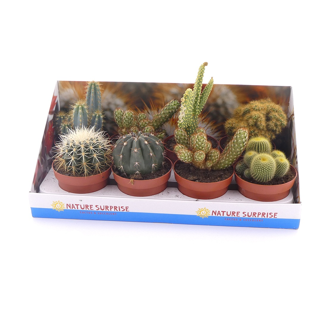 Productfotografie fotostudio planten cactus